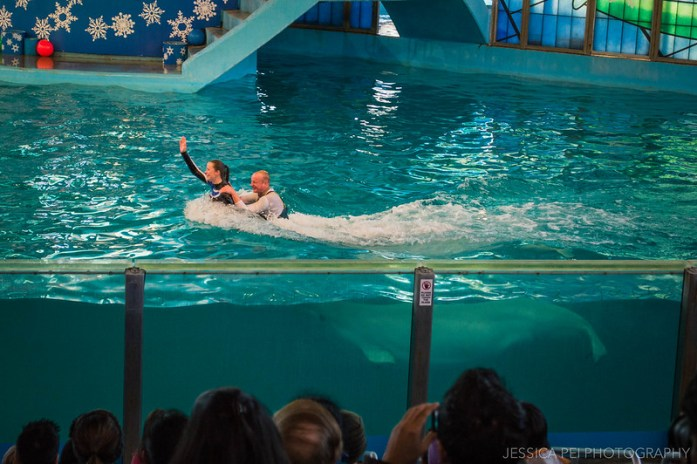 Beluga Christmas Whale Show Sea World