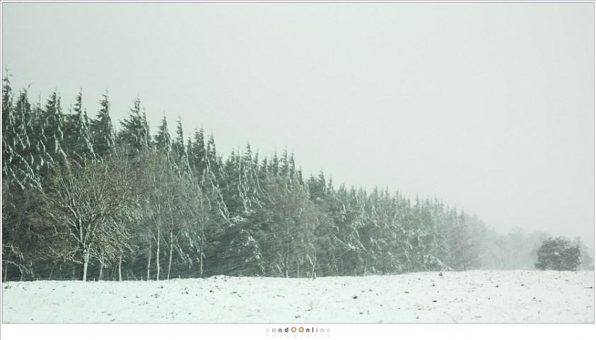 De bosrand in een sneeuwbui