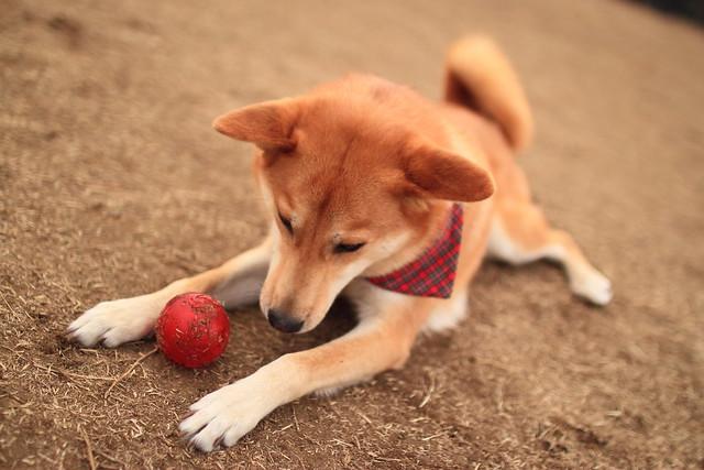 01_14_dog_run_0037