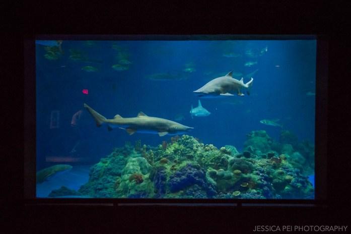 Sharks Exhibit Sea World San Antonio Texas