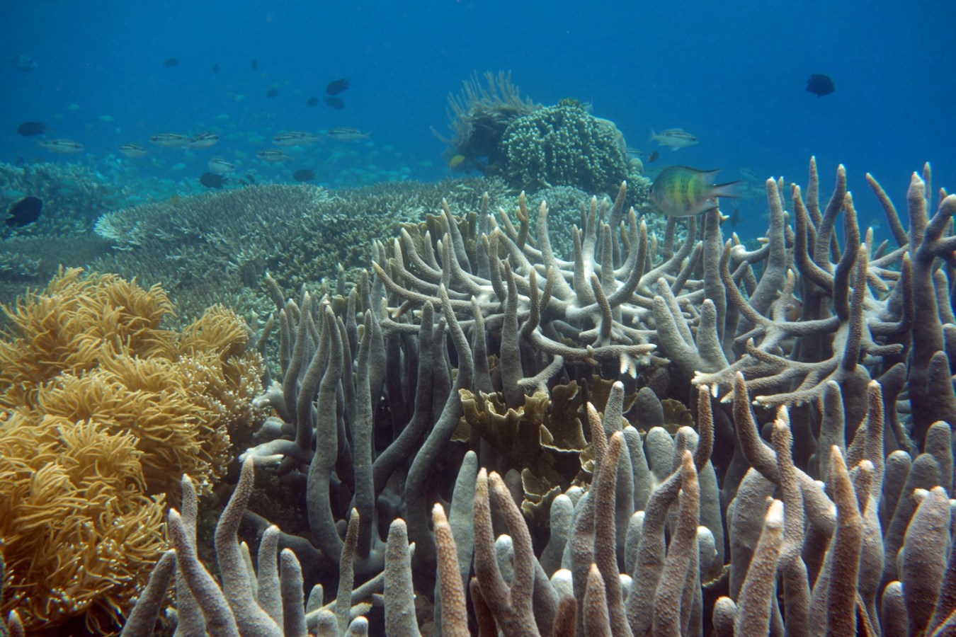 underwater world of bunaken