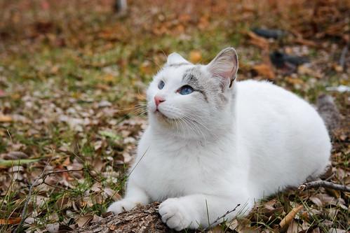 cat (2007)