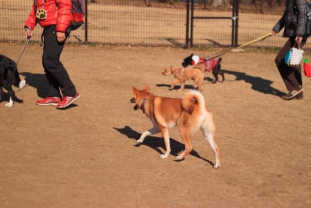 01_14_dog_run_0019