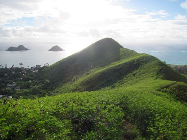 Picture from the Pillbox Trail
