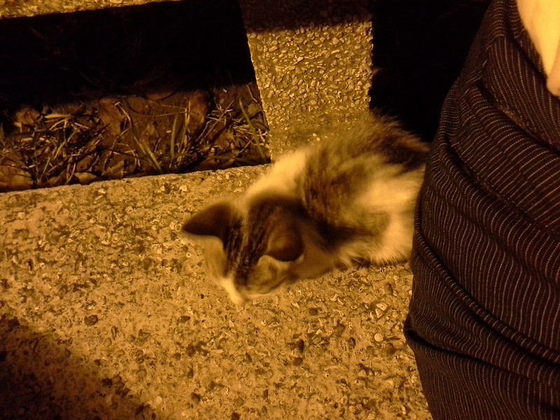 Sycip Kitten 20140506_212752