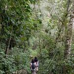 01 Viajfilos en Panama. Sendero Quetzal 23