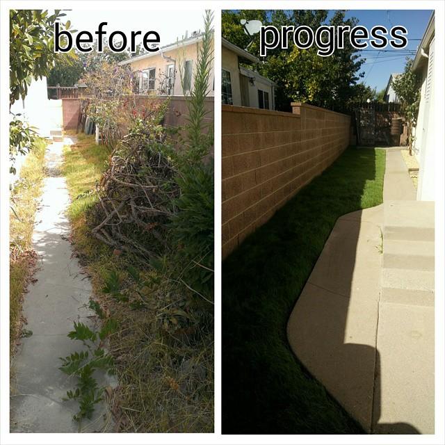 Side yard progress