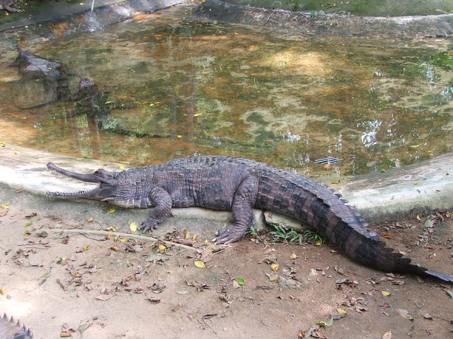 Picture from the Melaka Zoo