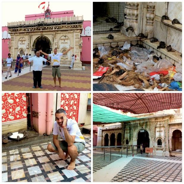 Templo de las ratas Karni Mata India