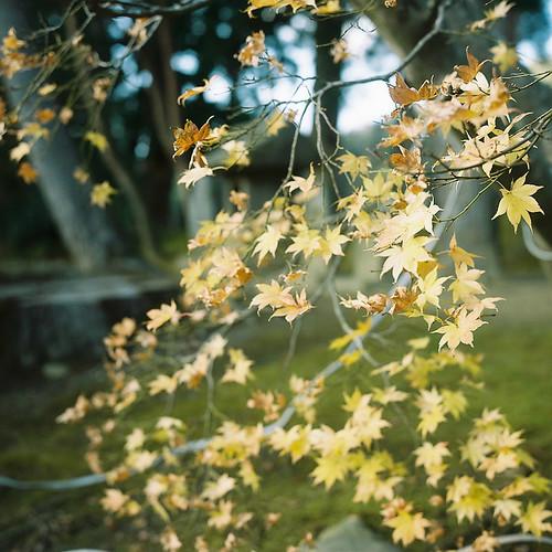 Rolleiflex_03_05