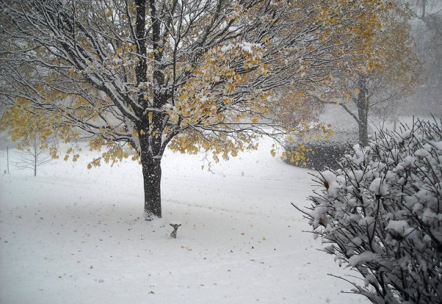 South Bend Record November 13 Snowfall