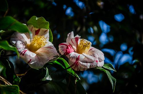 South Carolina Botanical Garden-011