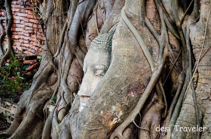 Buddha Head Tree root Wat Mahathat Temple Thailand