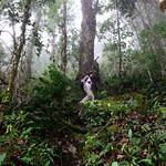 01 Viajfilos en Panama. Sendero Quetzal 59