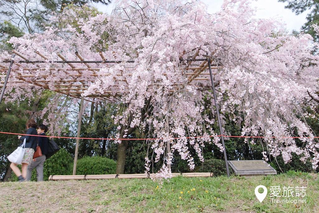 京都赏樱景点 半木之道 15