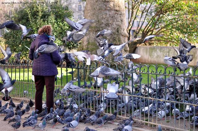 Feeding pigeons in Paris