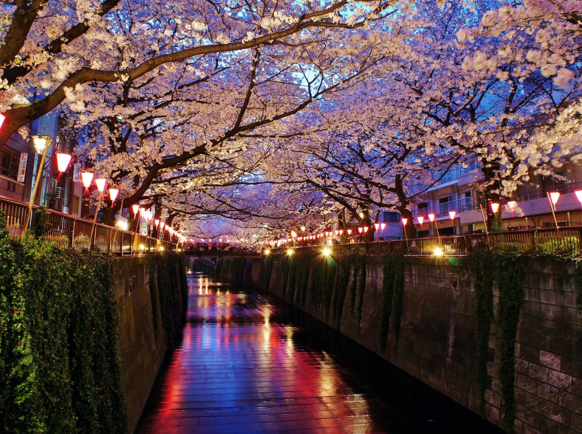 Meguro River Pink Illumination for Cherry Blossoms