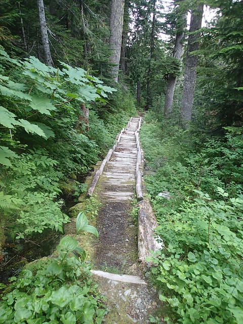 North Fork Of The Quinault Trail