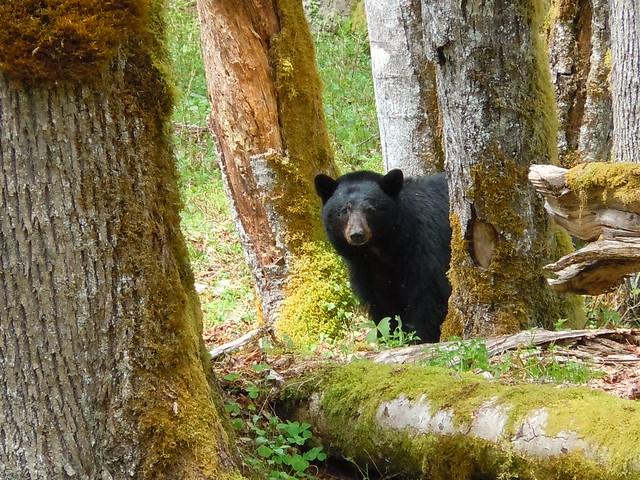 Bear #3