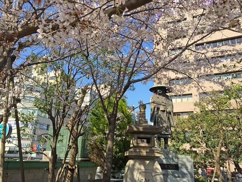 Cherry Blossoms at Tsukiji Honganji Temple(Tokyo, Japan)