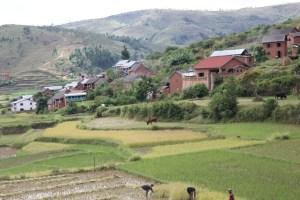 riziere pres d'un village malgache