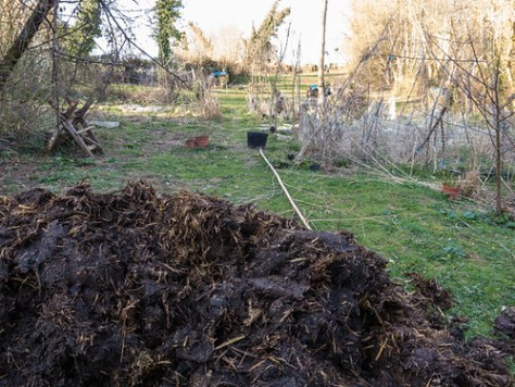 Well rotted manure in the kitchen garden