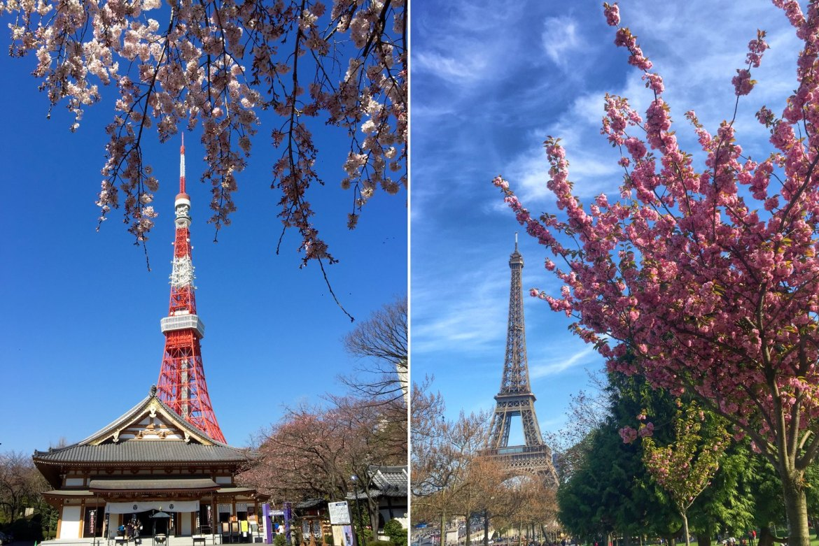 Sakura, Cherry blossoms at Tokyo Tower and Eiffel Tower