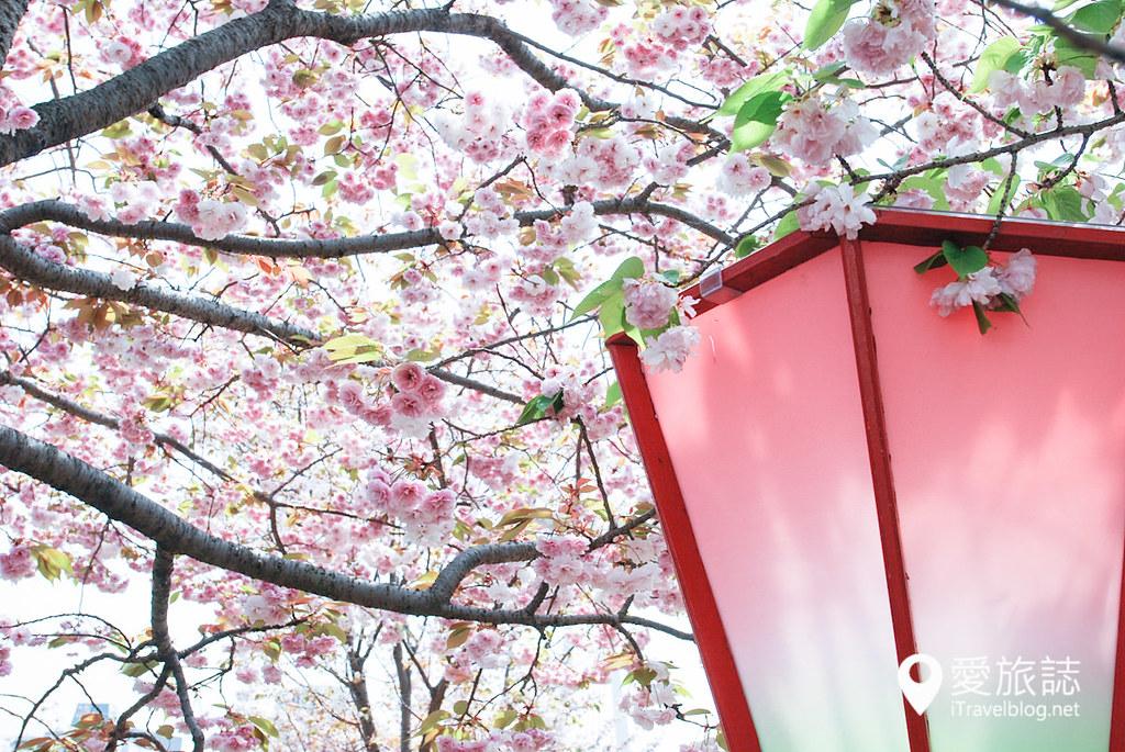 大阪造币局 樱花 15