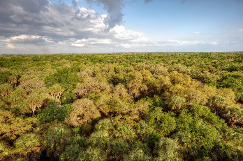 The view from the top of the tower on the canopy walk, Myakka River Park.