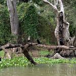 07 Viajefilos en Sri Lanka. Pueblos 21