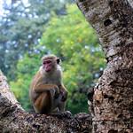 03 Viajefilos en Sri Lanka. Mihintale 02