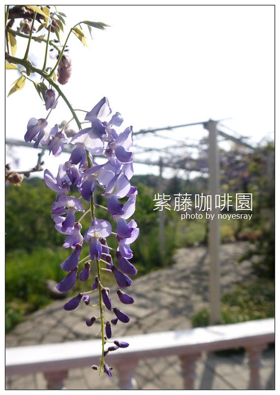 紫藤咖啡園 07