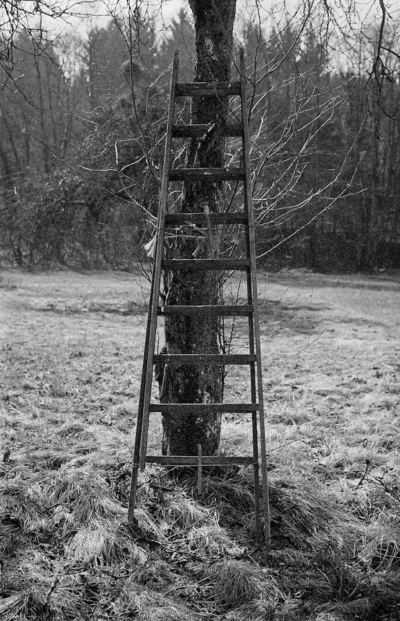 Day 89 _  climb the social ladder