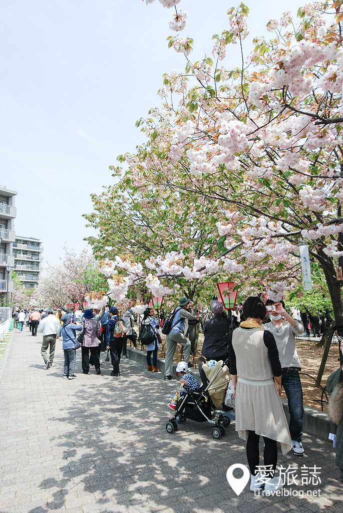 大阪造币局 樱花 31