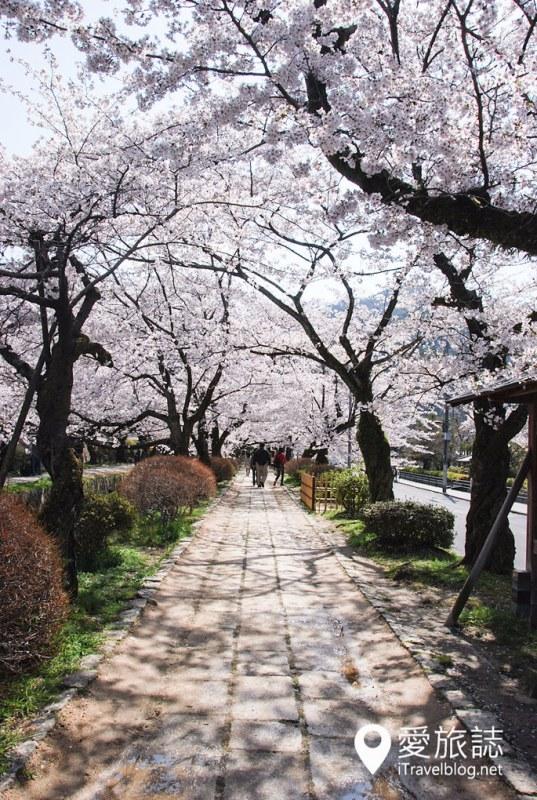 京都赏樱景点 哲学之道 04