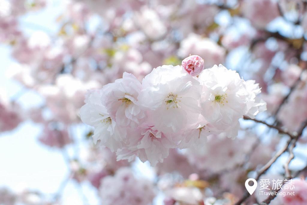 大阪造币局 樱花 42