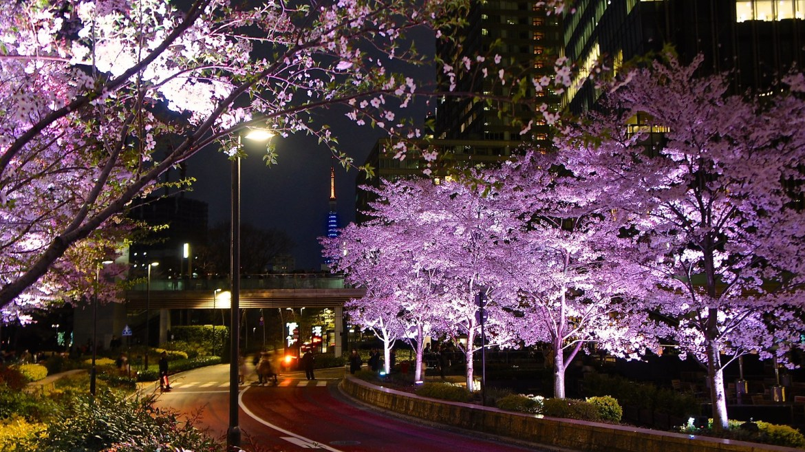 Tokyo Midtown Cherry Blossoms, the good an the bad by Manish Prabhune