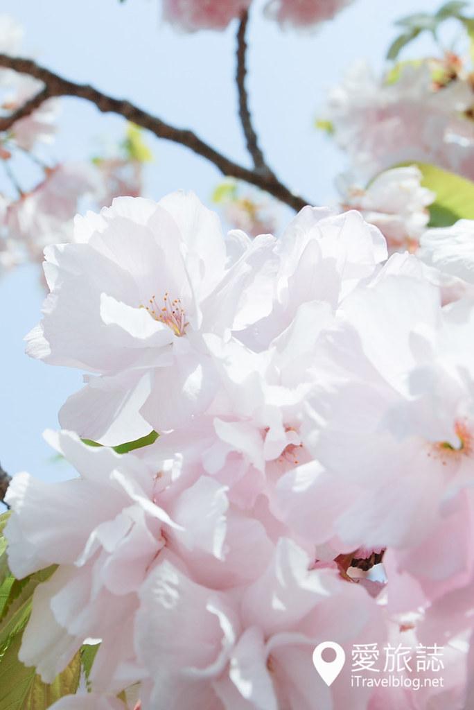 大阪造币局 樱花 11
