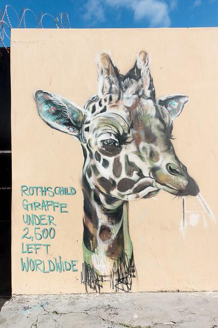 Cape Town Street Art 15