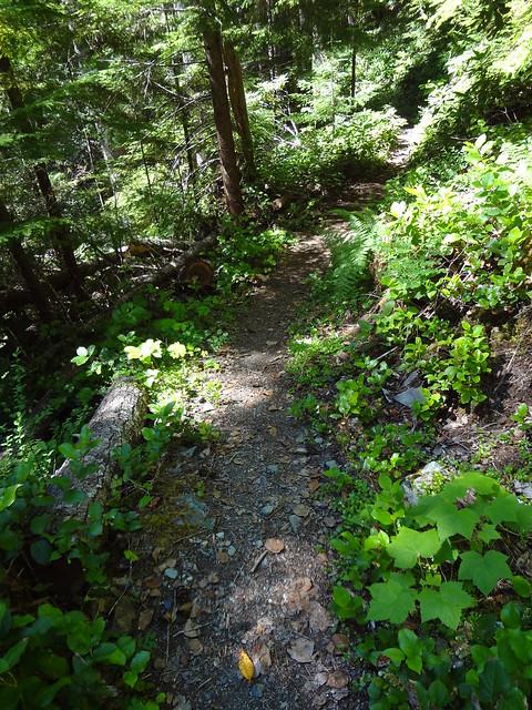Dosewallips River Trail