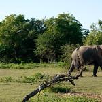 14 Viajefilos en Sri Lanka. Yala 03