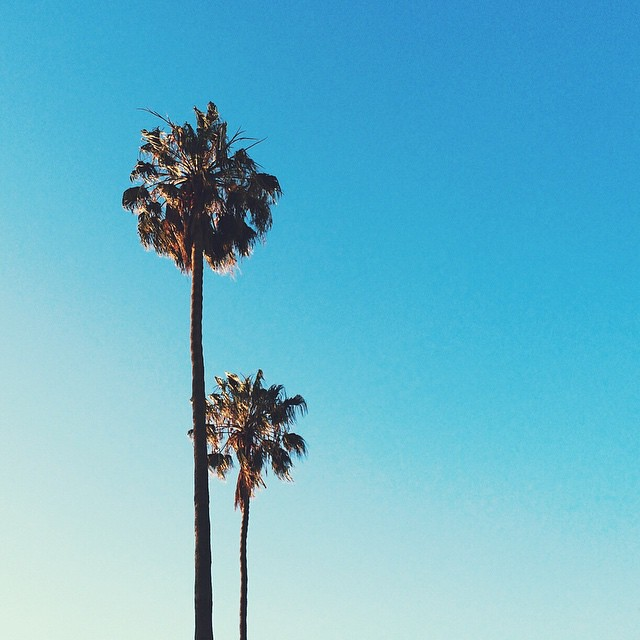 Palms_ig