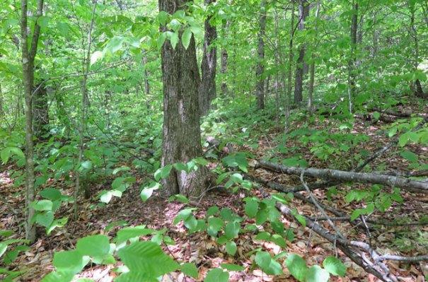 5-hidden-trail