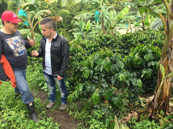 Carlos working with the growers