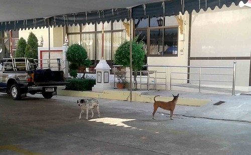 Local dogs