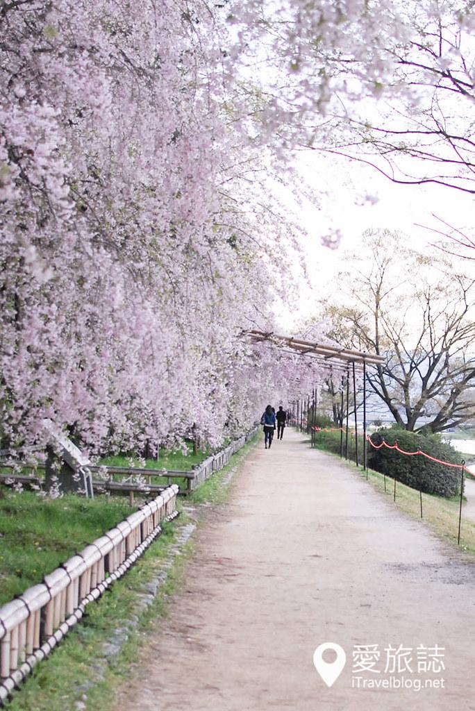 京都赏樱景点 半木之道 32