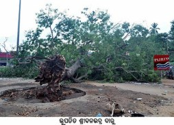 Fallen Balavadra Daru