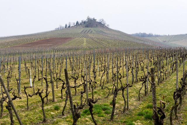Wein-Kultur-Landschaft