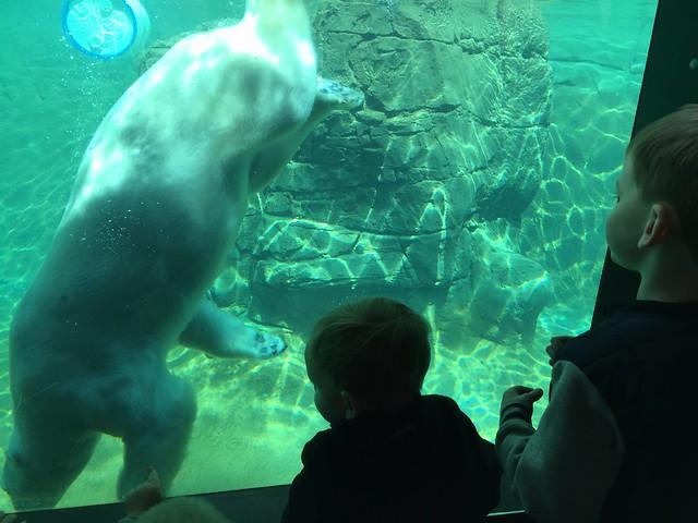 Denver Zoo April 2015