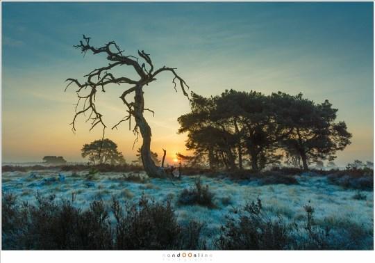 Met groothoek levert de zonsopkomst een heel ander beeld op, en een andere gekozen positie natuurlijk